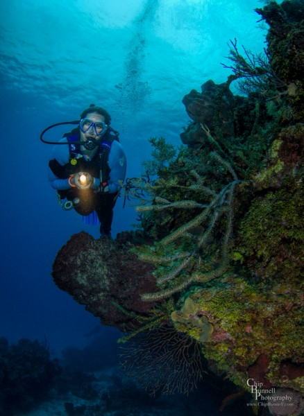 Chip Bunnell Photography of diver on underwater turtle reef in Grand Cayman
