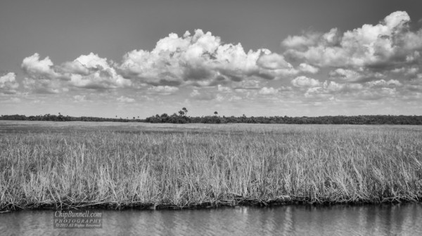 Everglades in Black and White by Chip Bunnell Photography